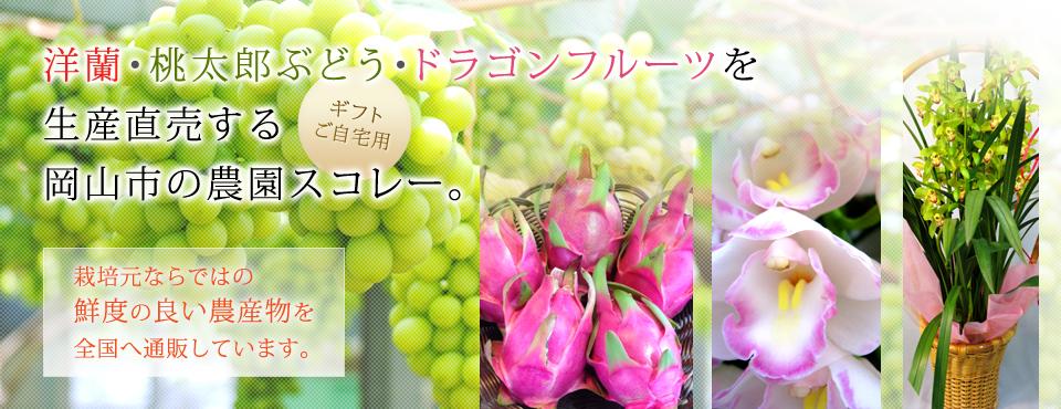 洋蘭、桃太郎ぶどう、ドラゴンフルーツを生産直売(ギフト・ご自宅用)する岡山市の農園スコレー。栽培元ならではの鮮度の良い農産物を全国へ通販しています。